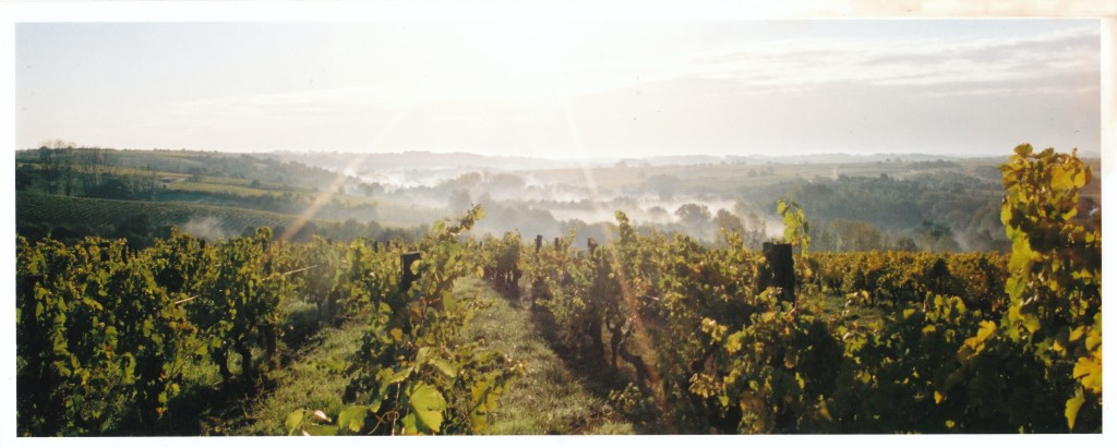 1988: Acquisition de Vignes